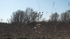 Dried flowers, meadow Stock Footage