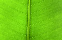 leaf  background - stock photo