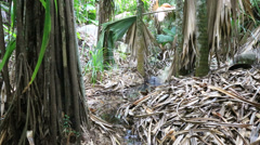 Creek in the jungle Stock Footage