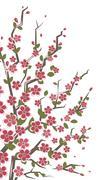 Sakura branch. Floral background. Stock Illustration