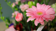 Stock Video Footage of Pink Flower Arrangement