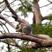 quirrel sitting on tree - stock photo