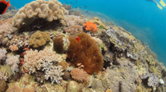Tropical fish and clownfish on a colorful tropical coral reef Stock Footage