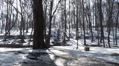 Spring in the woods start melting snow, birds singing - stock footage