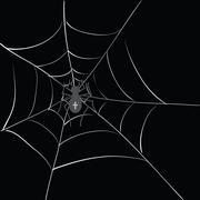 spider in web - stock illustration