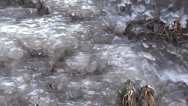Stock Video Footage of Spring creek that flows through the icy slope