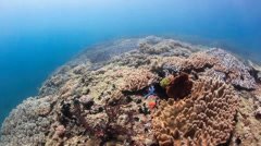 Swimming over the top of a colorful, sunlit tropical coral reef Stock Footage