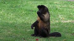 Monkeys Eating, Primates, Zoo Animals, Wildlife, Nature Stock Footage