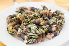 Goose barnacle Stock Photos