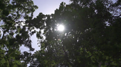 SLOW MOTION: Sun shining through lush leaves Stock Footage