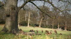 Deers in the park Stock Footage