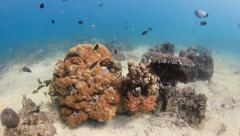 Colorful tropical fish swimming around a healthy coral pinnacle in shallow water - stock footage