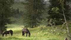 Horses pasture in green meadow Stock Footage