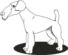 Airedale terrier for coloring book - stock illustration