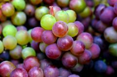 wine making process - stock photo