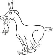 Goat for coloring book - stock illustration
