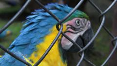 Caged Parrots, Birds, Animals, Wildlife, Nature Stock Footage