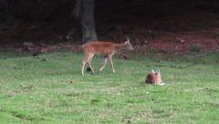 Deer, Elk, Moose, Mammals, Zoo Animals, Wildlife Stock Footage