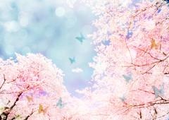 Cherry blossoms and butterflies Stock Illustration