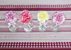 Carnations - stock photo