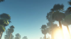 Fog glowing sun and palms Stock Footage