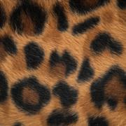 leopard or jaguar skin pattern background - stock photo
