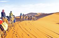 Stock Photo of camel caravan going through the sand dunes in the sahara