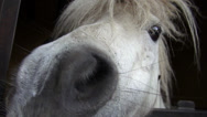 Stock Video Footage of Horse, Head, Farm Animals, Wildlife