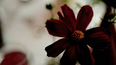 Table Decoration Stock Footage