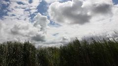 North Sea, Friesland, Wind Stock Footage