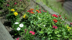 Flower Bed - stock footage