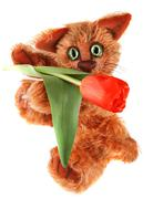 Unique ginger Cat holding tulip flower  on white background Stock Photos