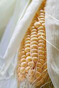 Fresh corncob sweetcorn with leaves Stock Photos