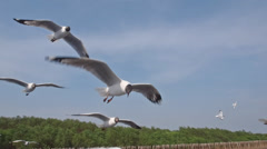 seagull on blue sky - stock footage