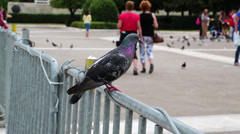 People and pigeons near Parliament and Syntagma Square in Athens, Greece Stock Footage