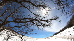 Super cool looking tree with sun in sky and snow on ground Stock Footage