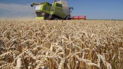 Combine harvesting wheat on a field Stock Footage