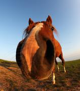 Funny horse by fisheye lens  and blue sky Stock Photos