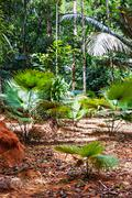 Tropical jungles of south east asia Stock Photos