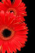 Red flower - stock photo