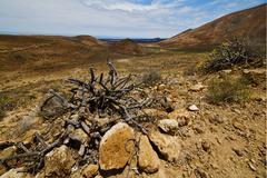 Vulcanic timanfaya  rock stone sky  hill Stock Photos