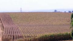 Harvesting a Cornfield in SC, Brazil. Stock Footage