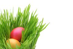 cute easter eggs with fresh grass - stock photo