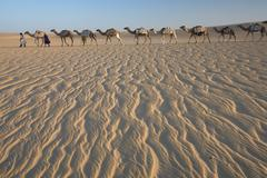 camel train, a group of animals haltered and led by two people on the windswe - stock photo