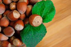 Some hazelnuts with leaves - stock photo