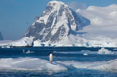 Jääpingviini, Antarktis - stock photo