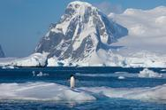 Stock Photo of adelie penguin, antarctica