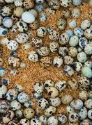 outdoor market, yangon, myanmar. a large group of eggs laid out on a market s - stock photo