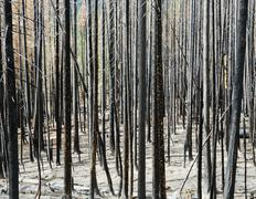 Fire damaged trees and forest (from the 2012 table mountain fire), okanogan-w Stock Photos