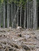 Recently clear cut rainforest, hoh rainforest, olympic nf Stock Photos